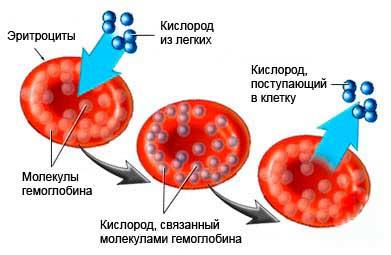 кислород в крови