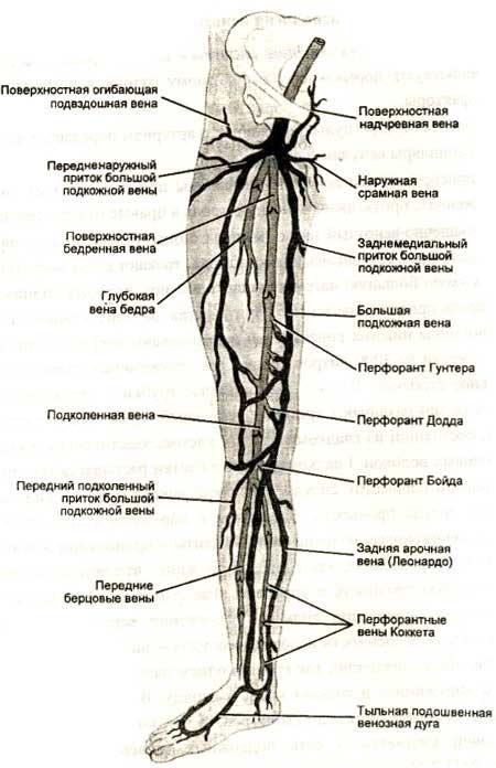 препараты для улучшения кровообращения в ногах