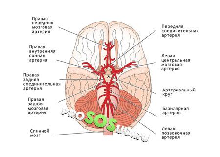 Гипертоническая энцефалопатия головного мозга: лечение и симптомы