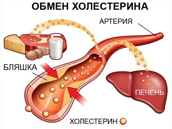 Норма холестерина у мужчин в 45 лет