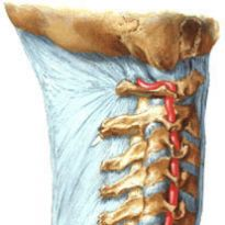 Гипоплазия правой и левой позвоночной артерии: причины, симптомы и ...