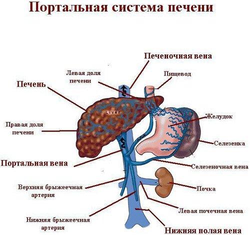 Портальная гипертензия: симптомы и лечение