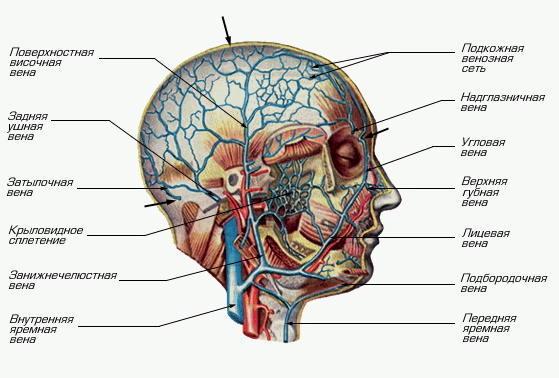 Дуплексное сканирование сосудов - Причины, симптомы и ...