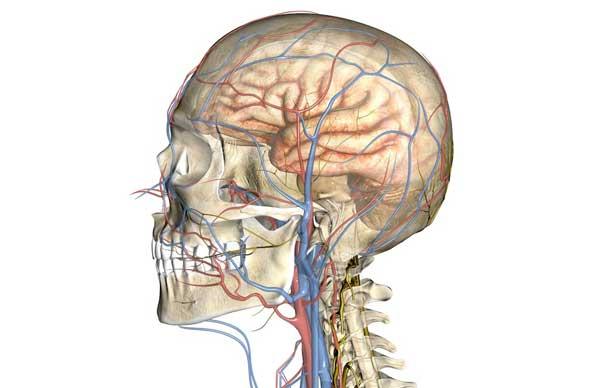 Церебральная ангиодистония сосудов головного мозга: лечение и признаки