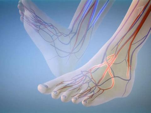 сосуды ног