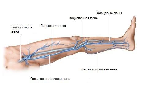Причины и лечение нарушения венозного кровообращения