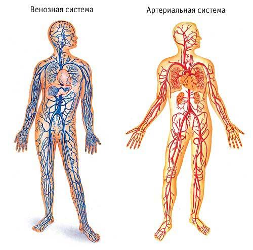 Нарушение венозного оттока: головного мозга и нижних конечностей