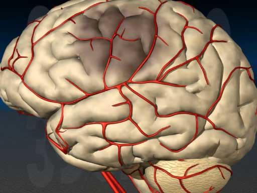 копиляры мозга