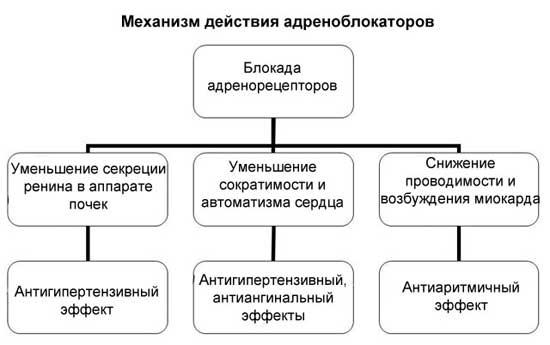 действие адреноблокаторов