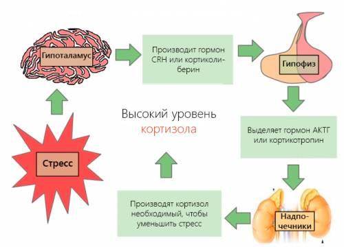 Кортизол в крови 20