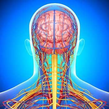 кровоток мозга