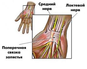 нервы на руке