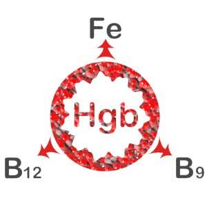 обозначение гемоглобина
