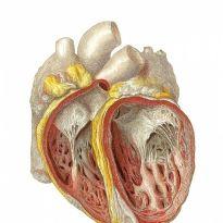 artículo781 - Reumatismo del corazón, cuáles son los síntomas y el tratamiento