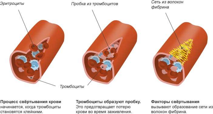 процесс свертывания крови