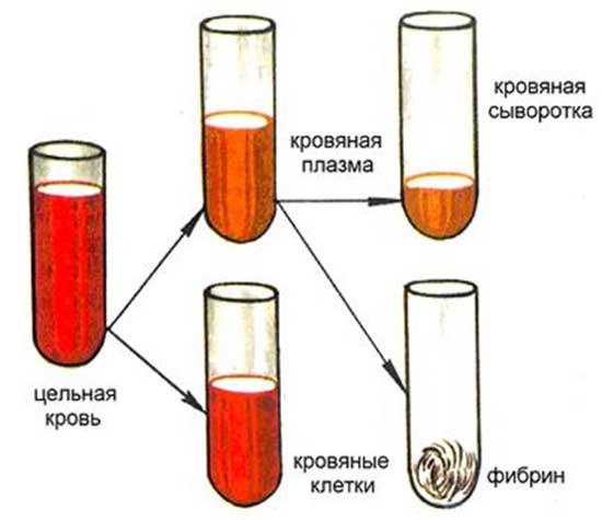 кровяная сыворотка
