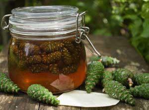 мед с шишками