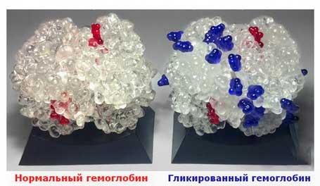 сравнение гемоглобина