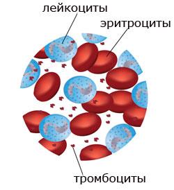 строение крови